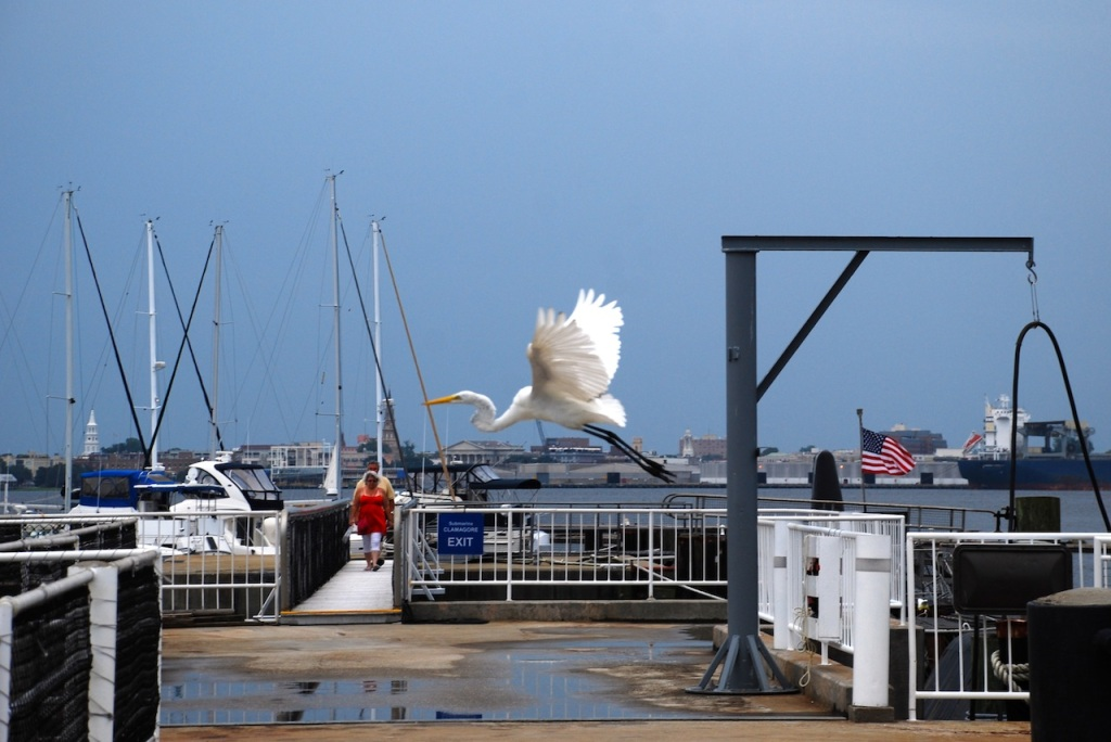 Patriot's Point, Charleston