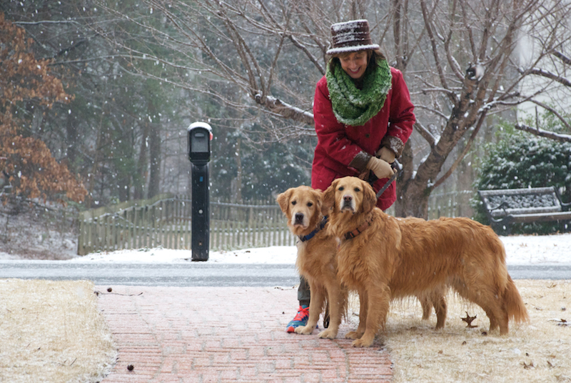 Dogs in Georgia snow