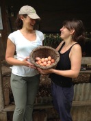Collecting eggs at the farm